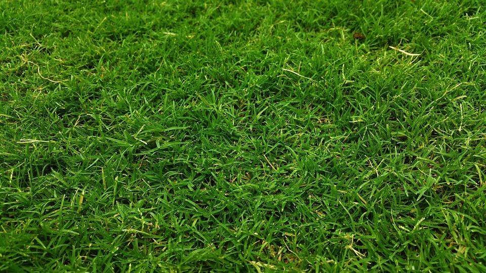 Dobrze trzeba przemyśleć sianie trawy