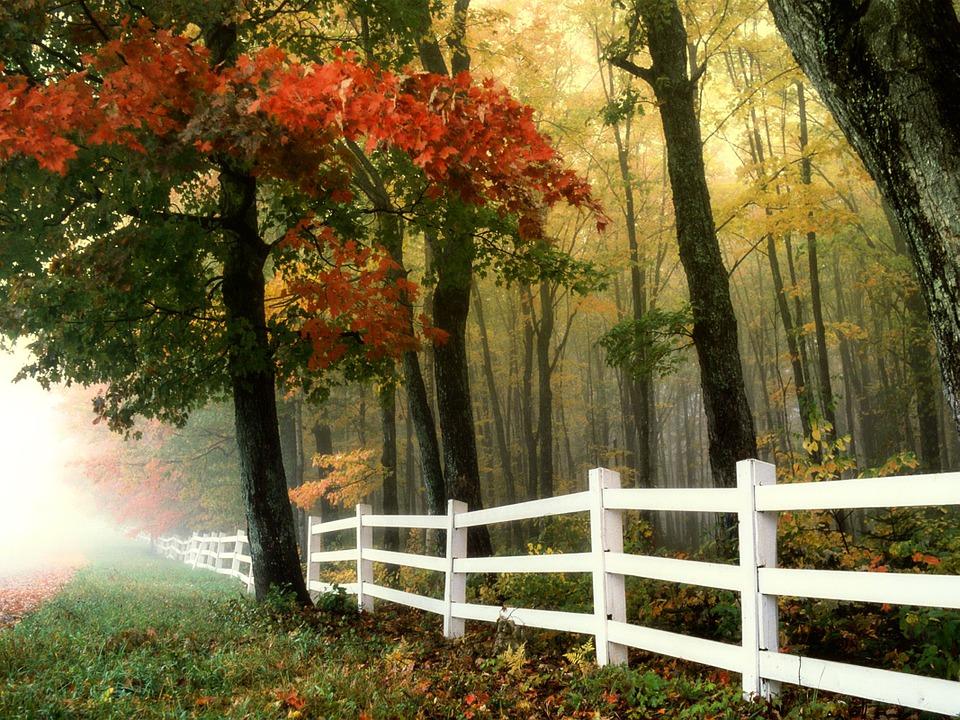 Pięknie się prezentują ogrodzenia z drewna