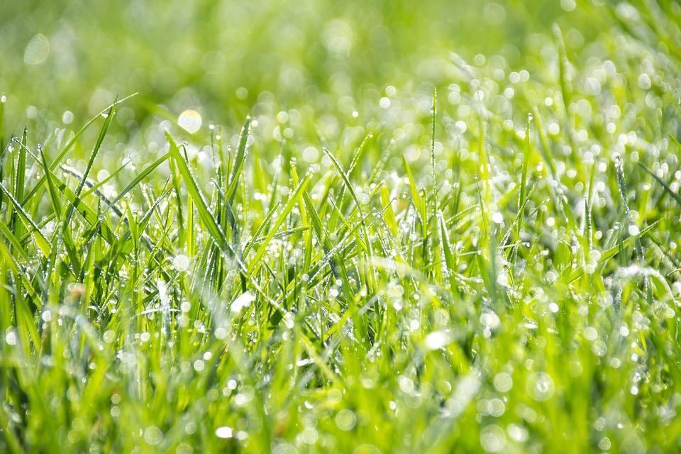 Kiedy wertykulować trawnik - to dobre pytanie
