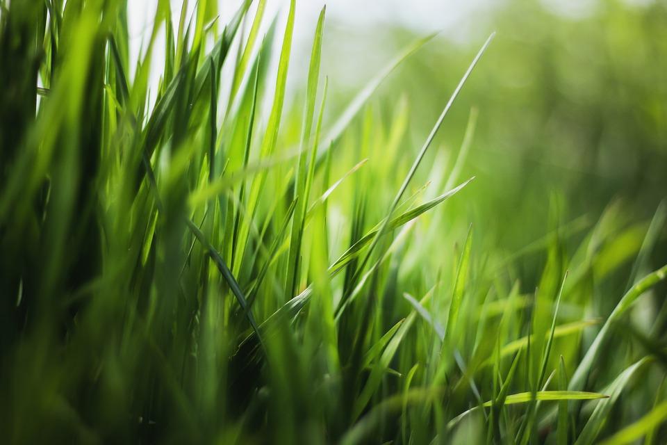 Co daje nam trawa gazonowa