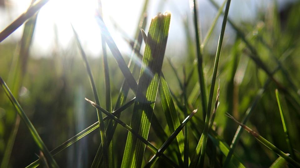 Jeśli potrzebne są nasiona traw - Cena będzie przystępna