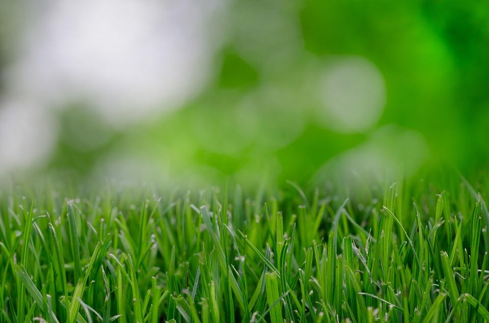 Piaskowanie trawnika czy się przydaje?