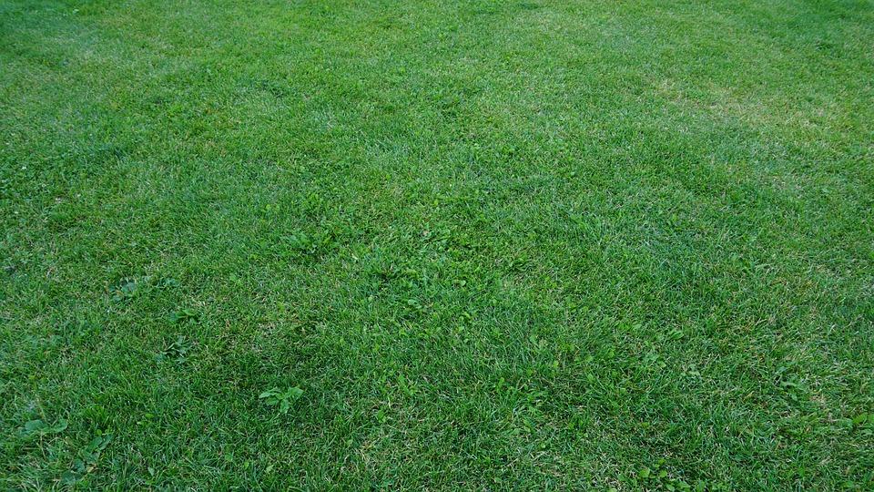 Na czym polega wałowanie trawnika?