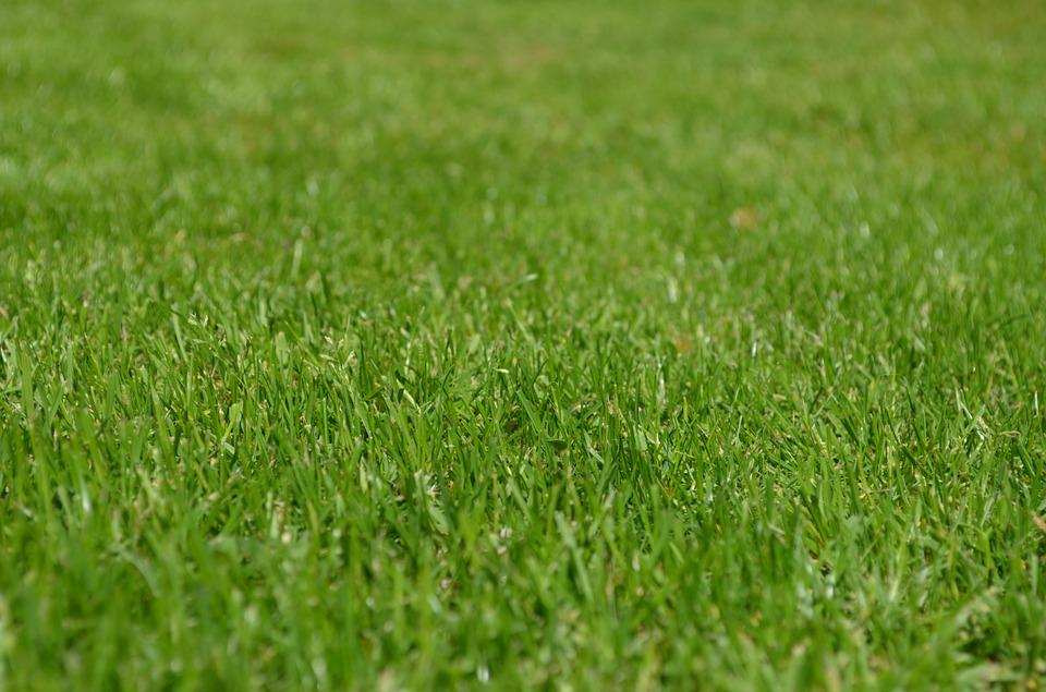 Czy myśleliśmy o ozdobnym trawniku?