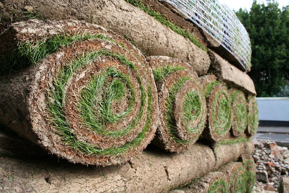 Czy potrzebujemy trawę z rolki cena za m2 nie jest wygórowana