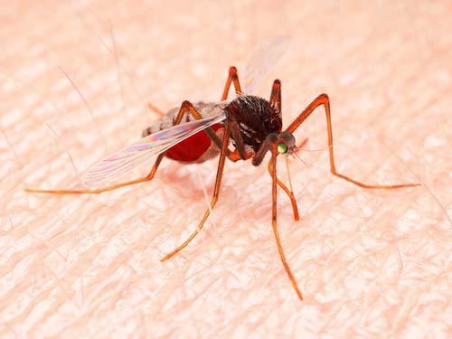 Irytujące owady – jak uniknąć ukąszeń